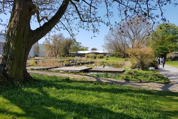 Das Foto zeigt einen Baum und Wasser im Grugapark in Essen