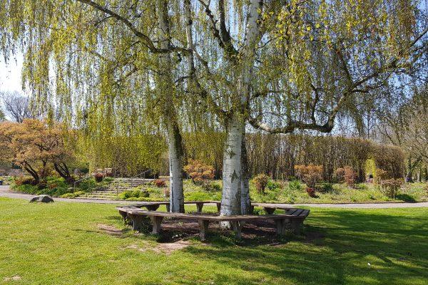 Das Foto zeigt einen Baum mit Bänken im Grugapark Essen - ein perfekter Ort für ein Picknick im Ruhrgebiet