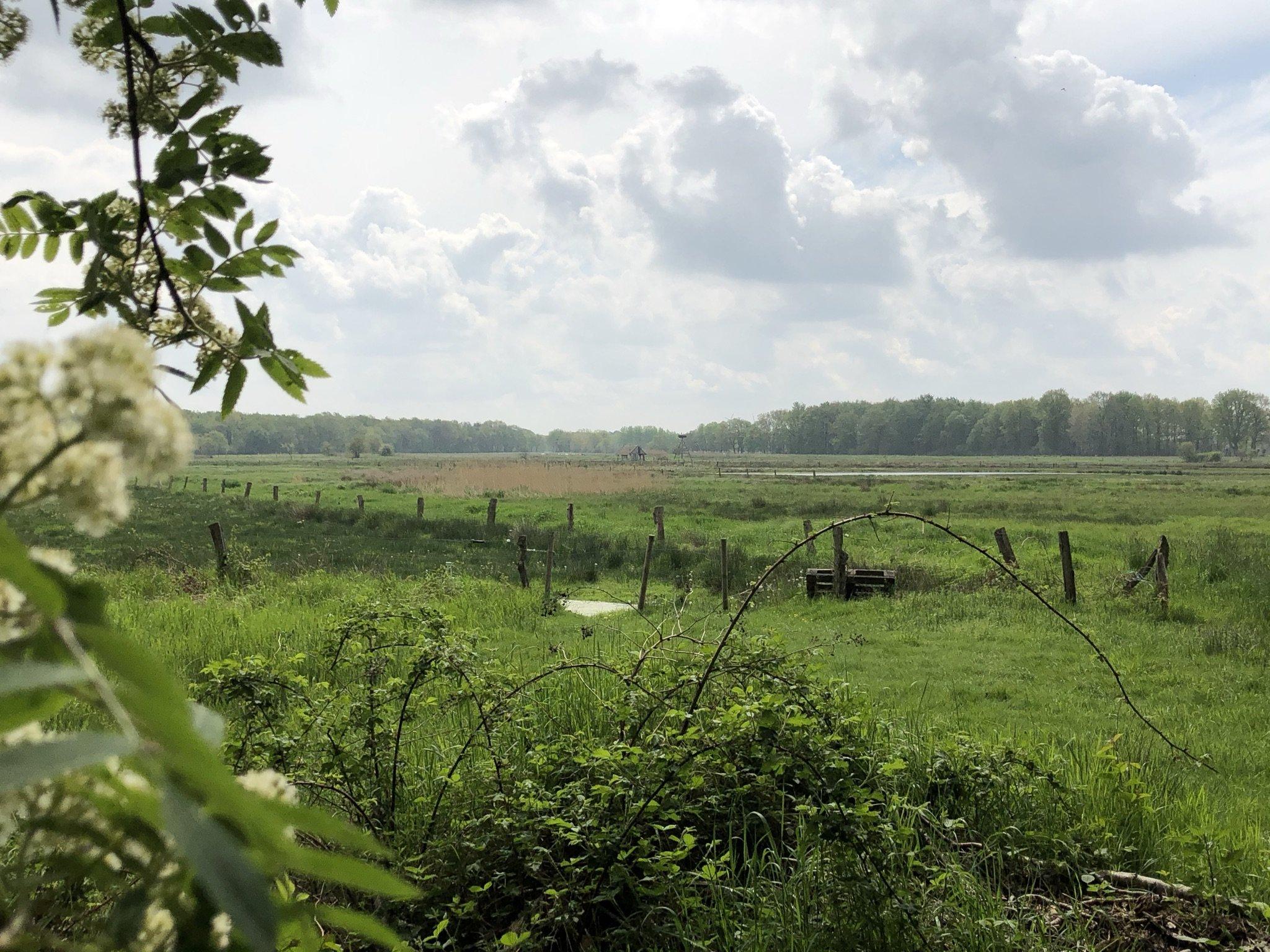 Blick ins Grüne der Dingdener Heide