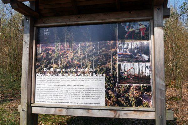 Das Foto zeigt eine Infotafel über den Einfluss auf den Sturm Kyrill auf den Hagener Wald