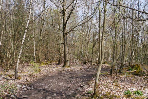 Das Foto zeigt den 3 Tüme WEG in Hagen