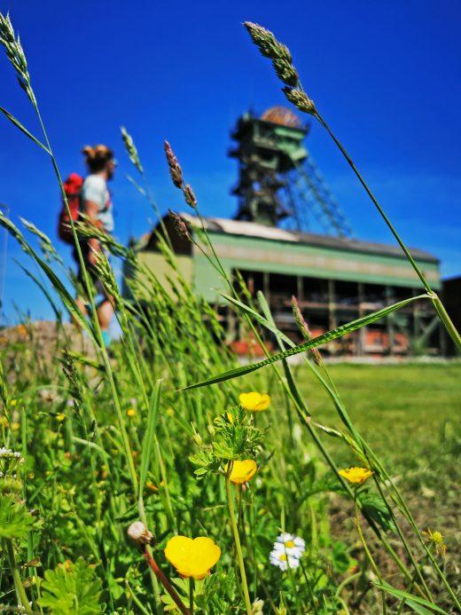 Das Foto zeigt die blühende Natur auf der Zeche Westfalen in Ahlen