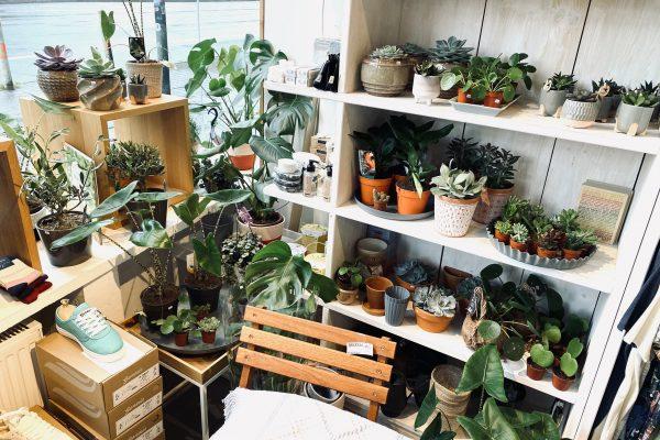 Das Foto zeigt Pflanzen im Concept Store Stückgut im Szeneviertel Bochum Ehrenfeld