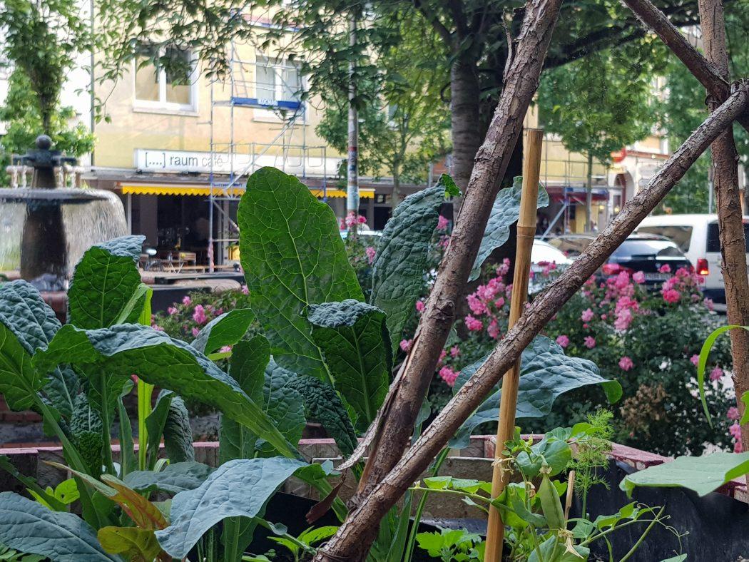 Das Foto zeigt ein Gemüsebeet im Wiesenviertel in Witten