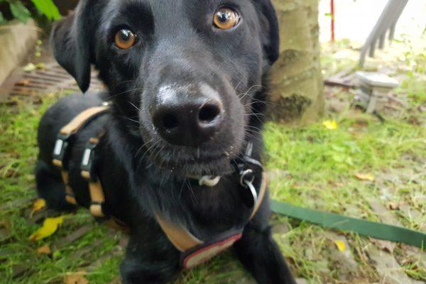 Das Foto zeigt Melissas Hund im Hinterhof der Eisdiele Kugelpudel in Dortmund