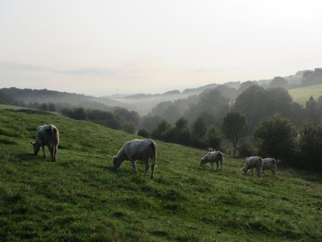 Das Foto zeigt Hühe in Breckerfeld