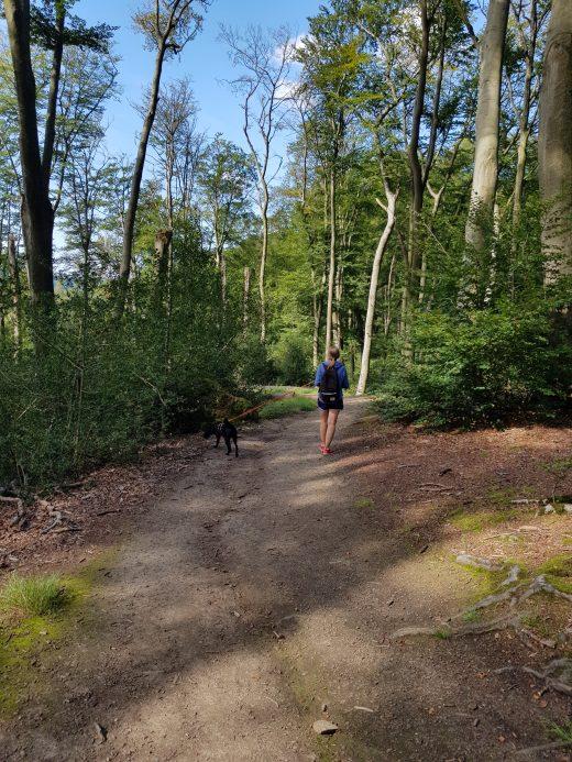 Das Foto zeigt ein Teilstück des Kettwiger Panoramasteigs im Wald