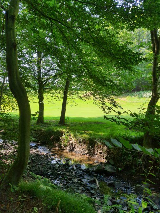 Das Foto zeigt einen Bach und grüne Wiesen auf dem Kettwiger Panoramasteig