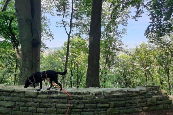 Das Foto zeigt Melissas Hund auf dem Kettwiger Panoramasteig