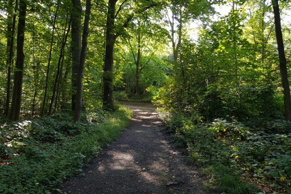 Das Foto zeigt ein Stück des Kettwiger Panoramasteigs, das durch den Wald führt