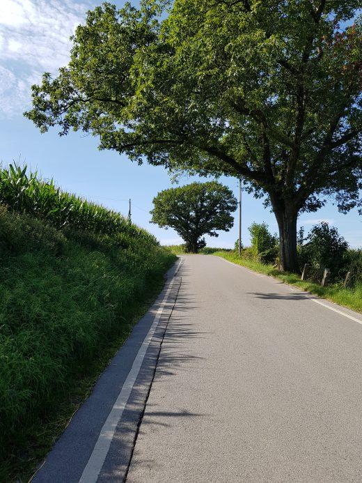 Das Foto zeigt Bäume an der Straße bei einer Wanderung auf dem Kettwiger Panoramasteig