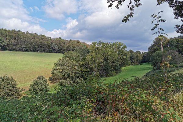 Das Foto zeigt grüne Felder in Sprockhövel bei der Wanderung von Hattingen nach Sprockhövel