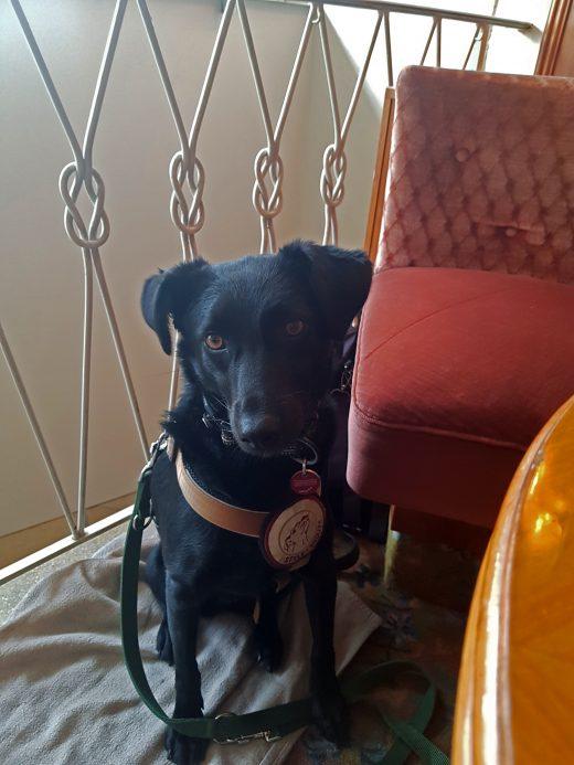 Das Foto zeigt Melissas Hund im Café Leye in Witten